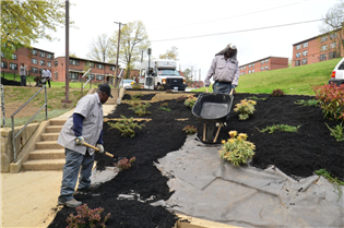 Crews plant shrubs to help catch stormwater.